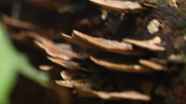 Shot of fungus growths on trees