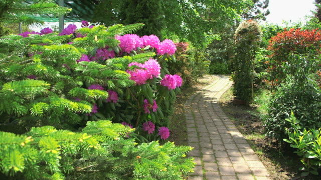 MS Shot of garden path for pink rhododendron / Saarburg, Rhineland Palatinate, Germany