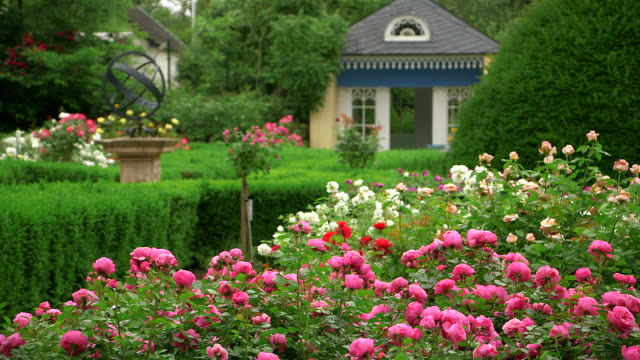 MS Shot of garden with fields of roses an pavillon, Rosa / Konz, Rhineland-Palatinate, Germany