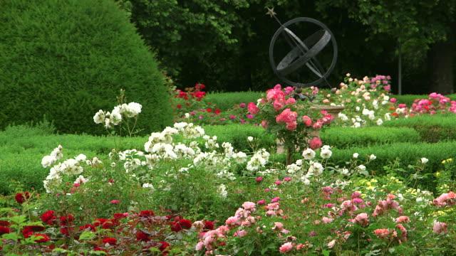 MS Shot of garden with roses / Konz, Rhineland-Palatinate, Germany