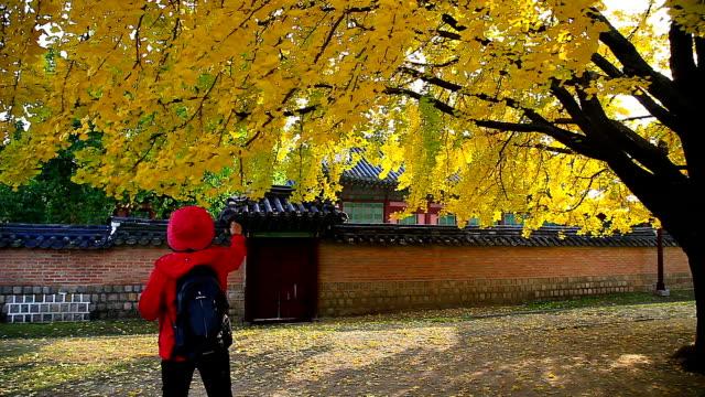 Shot of Ginkgo Trees at Gyeongbokgung Palace