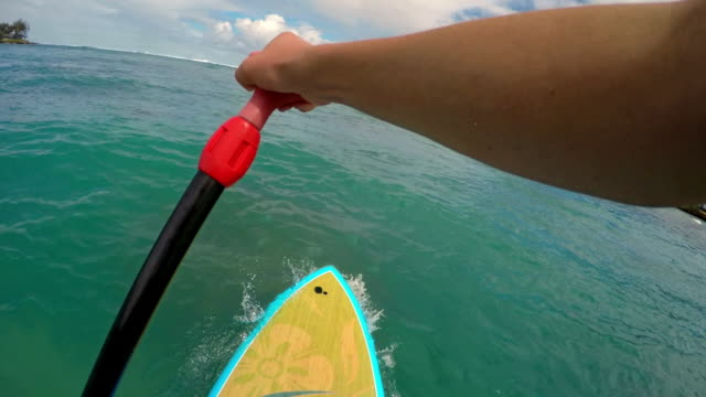vídeos de stock e filmes b-roll de pov shot of girl on a stand up paddle board - árvore tropical