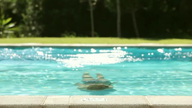 vídeos de stock, filmes e b-roll de ms shot of girl swimming in pool / pollenca mallorca, spain - ao lado de piscina