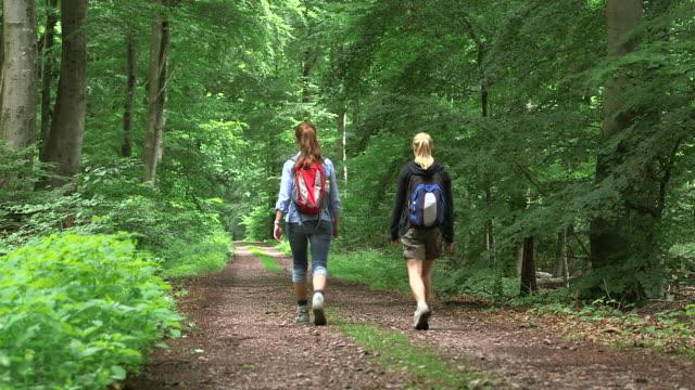 vidéos et rushes de ms shot of girls hiking in wood land / kastel staadt, rhineland palatinate, germany  - deux personnes