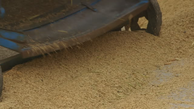 ms shot of grain exiting threshing machine / new delhi, india - threshing stock videos & royalty-free footage