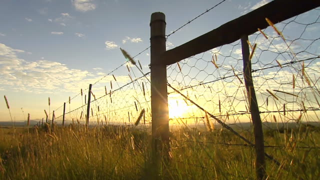 ms pov la shot of grass along fence, at sunset/sunrise / eastern cape, south africa - barbed wire stock videos & royalty-free footage