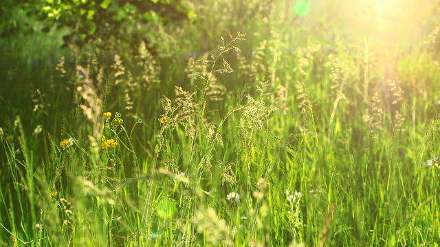 ms shot of grass meadow / kastel staadt, rhineland palatinate, germany - wiese stock-videos und b-roll-filmmaterial