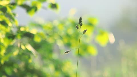 vídeos y material grabado en eventos de stock de cu shot of grass meadow / kastel staadt, rhineland palatinate, germany - enfoque diferencial