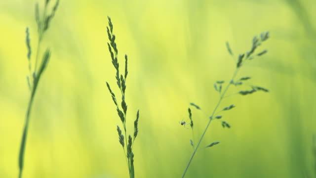 stockvideo's en b-roll-footage met cu shot of grass meadow / kastel staadt, rhineland palatinate, germany - ongewerveld dier