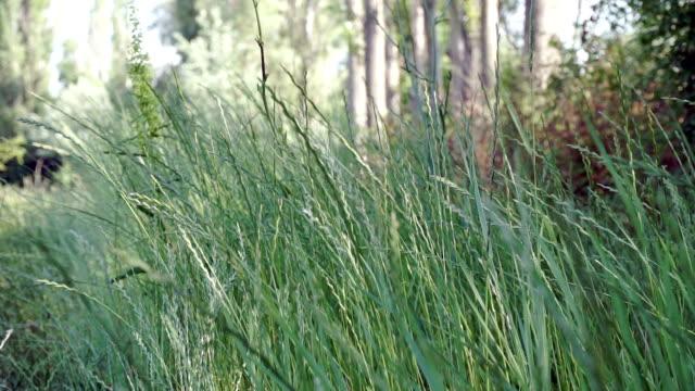 HD: Shot of grass meadow