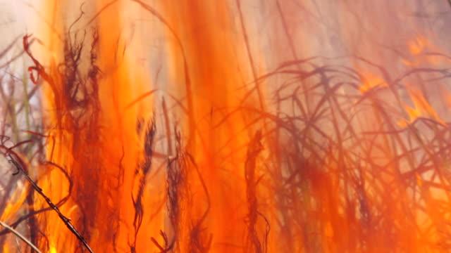 """MS Shot of grass on fire / Assam, Golaghat, India"""