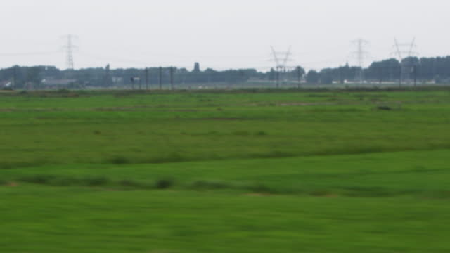 vídeos de stock e filmes b-roll de shot of green fields in amsterdam - grupo médio de animais