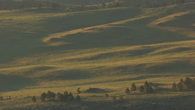 stockvideo's en b-roll-footage met ms aerial shot of green rolling hill in campbell county / wyoming, united states - heuvel