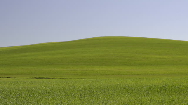 ws shot of green tuscany hill / pienza, tuscany, italy - hill stock videos & royalty-free footage