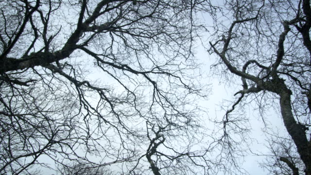 vídeos y material grabado en eventos de stock de ms ds shot of ground view of leafless trees / ben hope, scotland, united kingdom - árbol latente