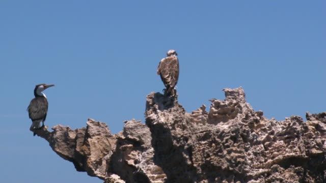 A shot of gulls on rocks