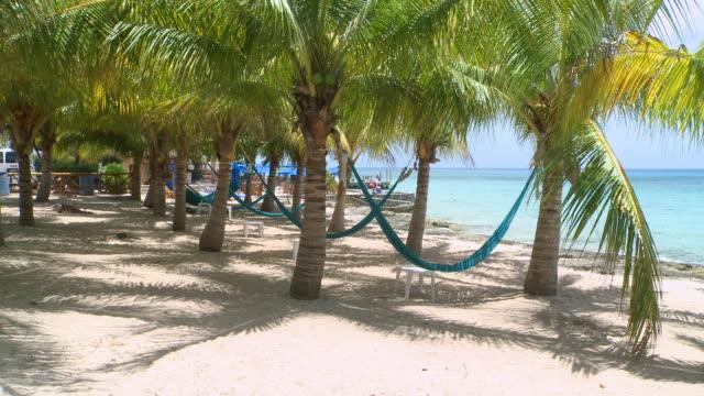 vídeos y material grabado en eventos de stock de ms shot of hammocks hanging between palm trees at the shore / cozumel, quintana roo, mexico - quintana roo