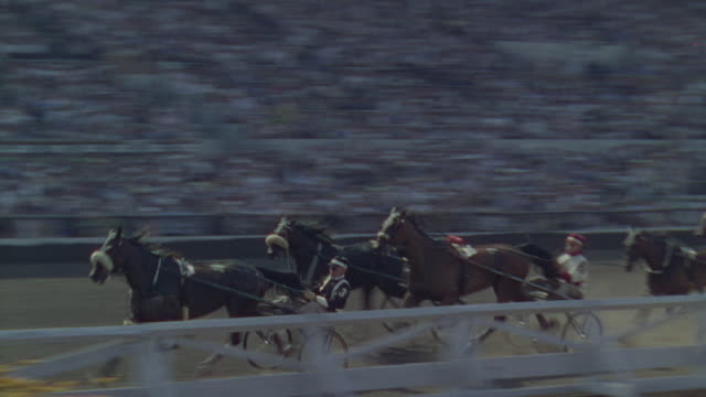 ms ts shot of harness race and large audience fills stands - gruppo medio di animali video stock e b–roll