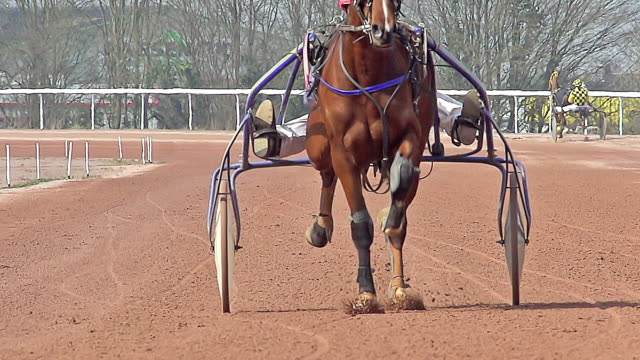 MS TS SLO MO Shot of Harness racing at Racecourse / Caen, Normandy, France