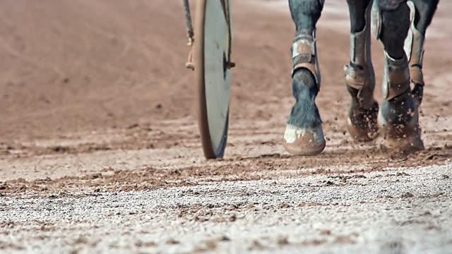 cu ts slo mo shot of harness racing at racecourse / caen, normandy, france - 四輪馬車点の映像素材/bロール