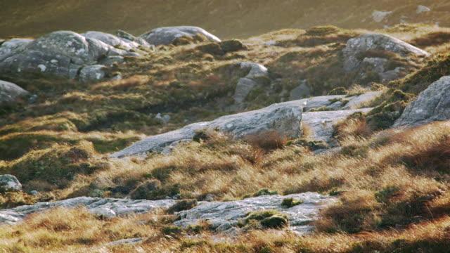 ms pan shot of harris island heathland and rocks with sun and wind / harris island, scotland, united kingdom - 2k resolution stock videos and b-roll footage