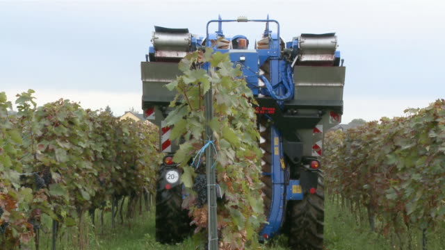 ms shot of harvester at vineyard / nittel, rhineland-palatinate,  germany - vineyard stock videos & royalty-free footage