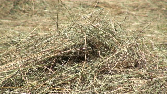CU Shot of hay / Serrig, Rhineland-Palatinate, Germany