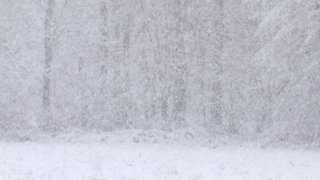 MS Shot of Heavy snow and forest / Tweed, Ontario, Canada