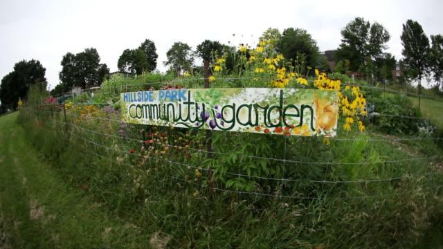 ws shot of hillside park community garden / tornto, ontario, canada - community garden stock videos & royalty-free footage