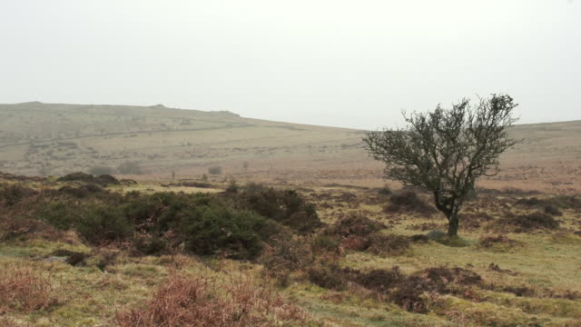 ws shot of hilly landscape with vegetation and small tree with foggy skies / dartmoor, england, united kingdom - wiese stock videos & royalty-free footage