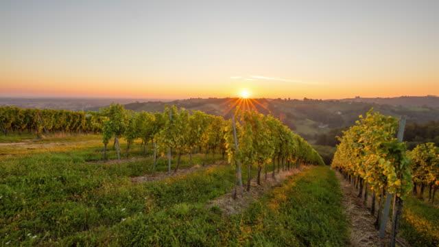 t/l 8k shot of hilly vineyards at sunrise - prekmurje stock videos & royalty-free footage