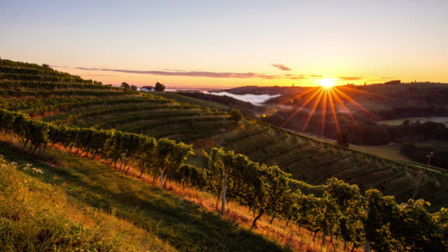 t/l 9k shot of hilly vineyards at sunset - vine stock videos and b-roll footage