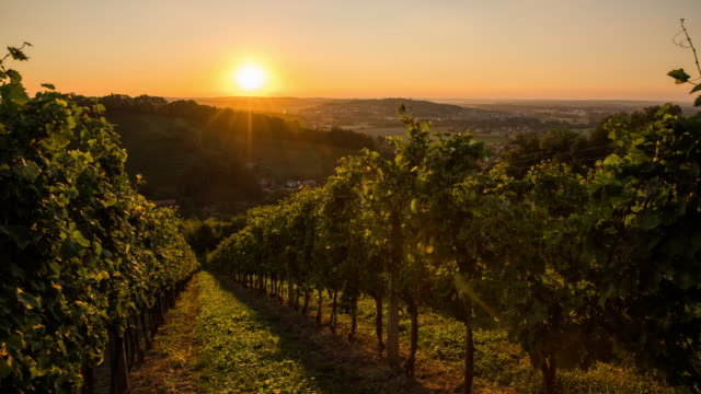 T/L 8K shot of hilly vineyards at sunset