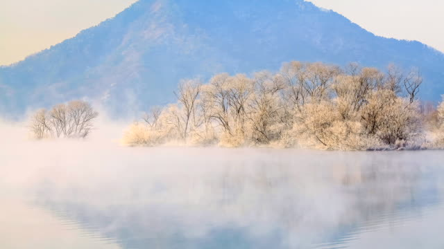 ms t/l shot of hoarfrost on tree and wet fog in soyanggang river / chuncheon, gangwondo, south korea - wet wet wet stock videos & royalty-free footage
