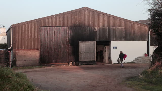 vídeos de stock, filmes e b-roll de ws shot of horse leaving stables / helland, bodmin, cornwall, united kingdom - animal de trabalho