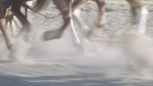 stockvideo's en b-roll-footage met cu ts shot of horse running from dirt road - koets