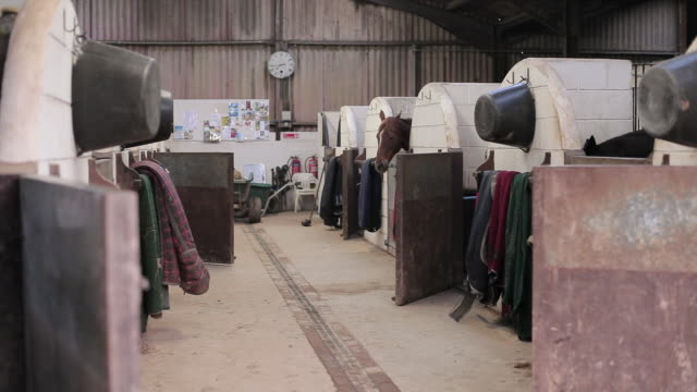 ms shot of horse stables / helland, bodmin, cornwall, united kingdom - 厩舎点の映像素材/bロール