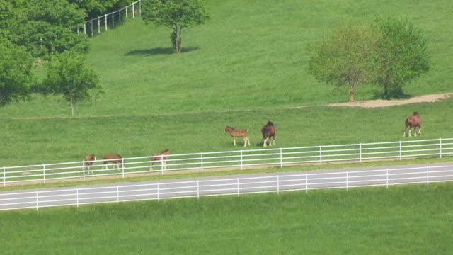 ms aerial zo shot of horses at warm springs ranch / boonville, missouri, united states - pferdestall stock-videos und b-roll-filmmaterial