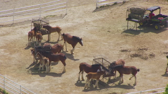 ms aerial ts ds zo shot of horses eating grass at warm springs ranch / boonville, missouri, united states - pferdestall stock-videos und b-roll-filmmaterial