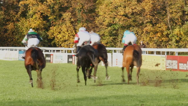 ws ts shot of horses gallop down home stretch / cologne, north rhine westphalia, germany  - galoppieren stock-videos und b-roll-filmmaterial
