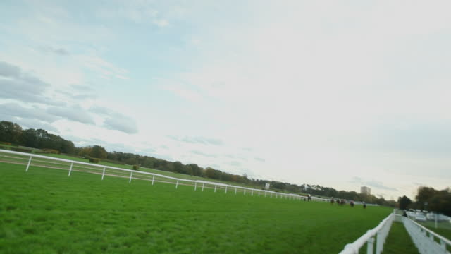 ws ts shot of horses gallop down home stretch / cologne, north rhine westphalia, germany  - trot animal gait stock videos & royalty-free footage