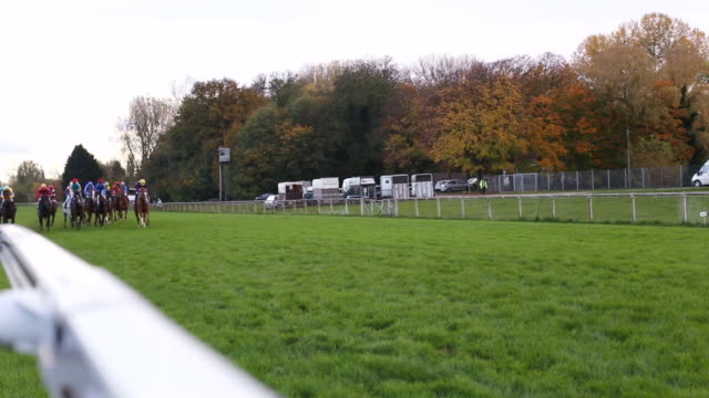 ms shot of horses gallop down home stretch / cologne, north rhine westphalia, germany  - galoppieren stock-videos und b-roll-filmmaterial