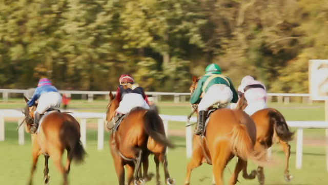 ms ts shot of horses gallop down home stretch / cologne, north rhine westphalia, germany  - pferderennbahn stock-videos und b-roll-filmmaterial