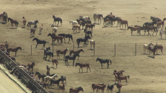 ms aerial zo shot of horses in pens at indian lakes road facility / fallon, nevada, united states - animal pen stock videos & royalty-free footage