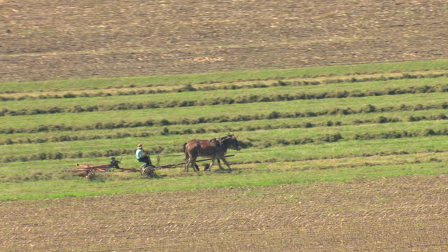 MS AERIAL ZI Shot of horses pulling farmer on manual machine making hay in Amish country / Pennsylvania, United States