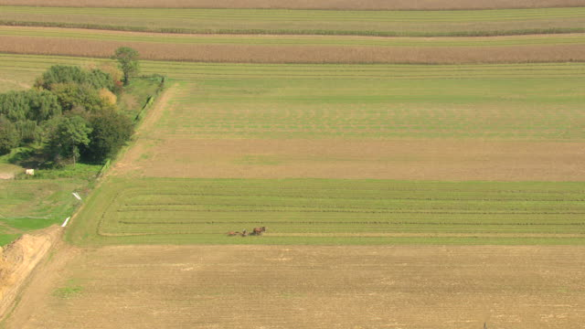 MS AERIAL TS DS Shot of horses pulling farmer on manual machine making hay in Amish country / Pennsylvania, United States