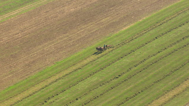 MS AERIAL TS ZI Shot of horses pulling farmer on manual machine to making hay in Amish country / Pennsylvania, United States