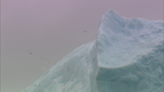 Shot of Iceberg and dragonfly like Insects