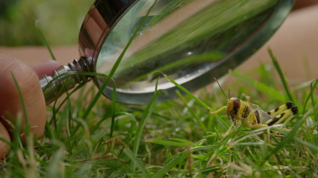 ECU Shot of Insect being studying under magnifying glass in grass / London, Hampstead, United Kingdom