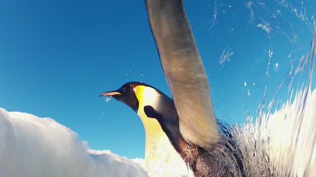 vídeos y material grabado en eventos de stock de cu la shot of inside hole in ice as emperor penguins jumping out and water level with blue sky back side / dumont d'urville station, adelie land, antarctica - agujero